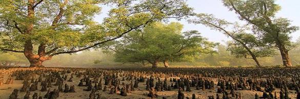 Sundarban3221