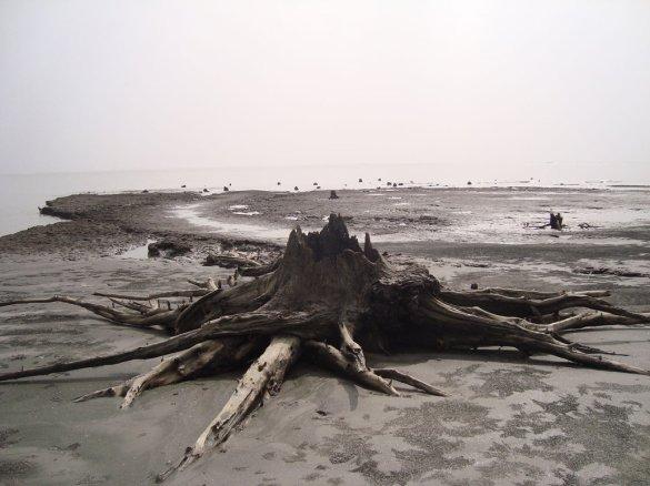 Sundarban_3_by_capmunir